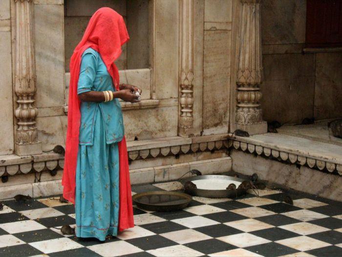 atrações turísticas mais sujas ratos india