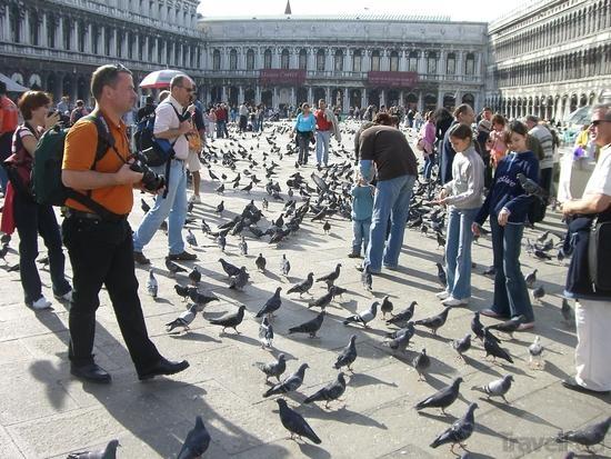 atrações turísticas mais sujas veneza pombos